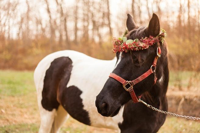 Christmas-horse-styled-shoot-188.jpg